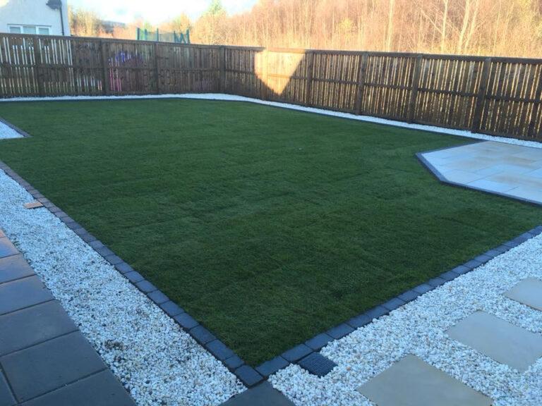Grass in back garden