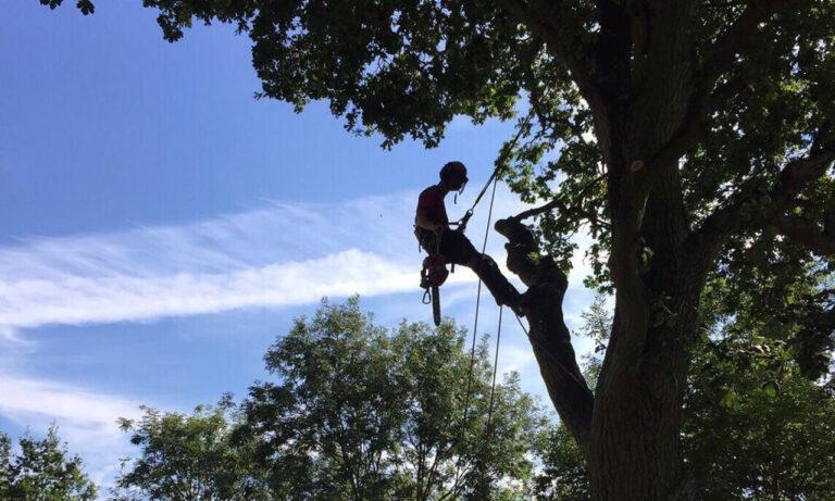 Tree Surgery Glasgow